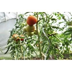 Tyczki spiralne do pomidorów