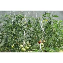 Tyczka do pomidorów
